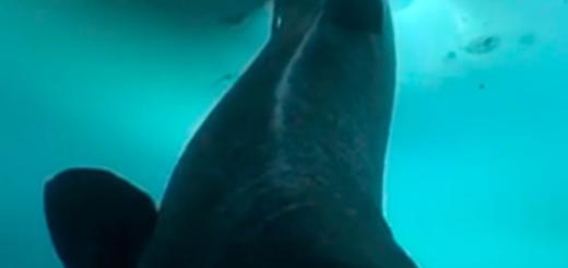 Shark-fishmag-info