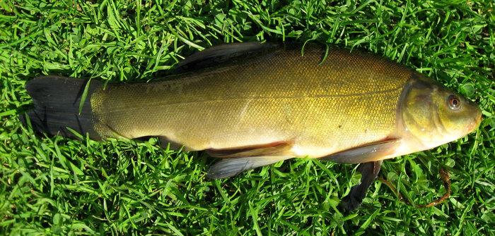 2844_club-fish.ru_3