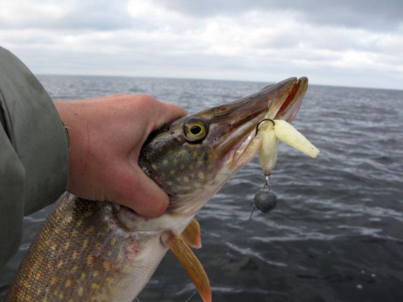 ловим рыбу на поролоновую рыбку