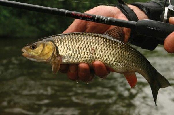 рыбалка в подмосковье угря