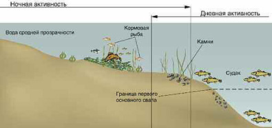 как правильно ловить судака весной